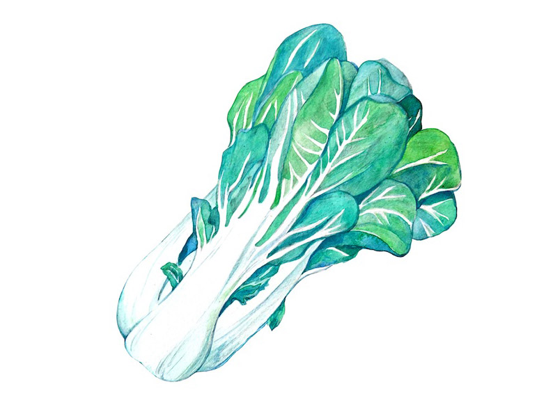 Illustration of Chinese vegetable