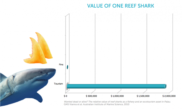 Graph displaying the value of one reef shark