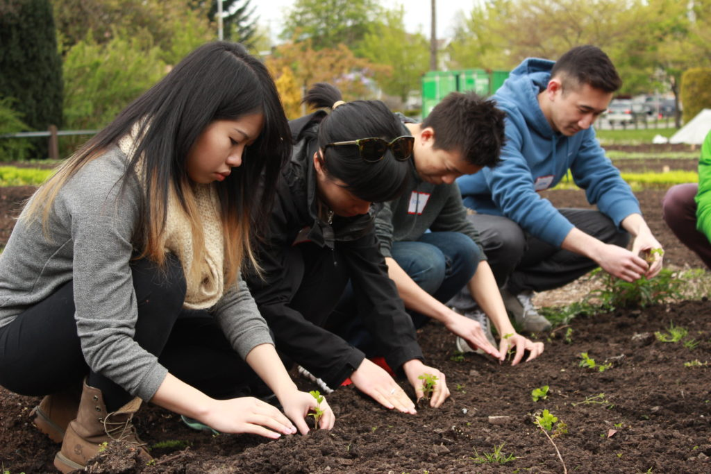 Group of youth crouched over soil, working in a garden