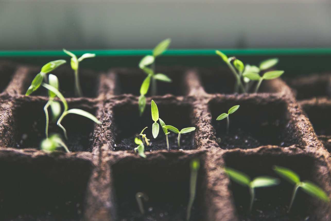 Sprouting plants in conatiners - Credit: Unsplash @markusspiske